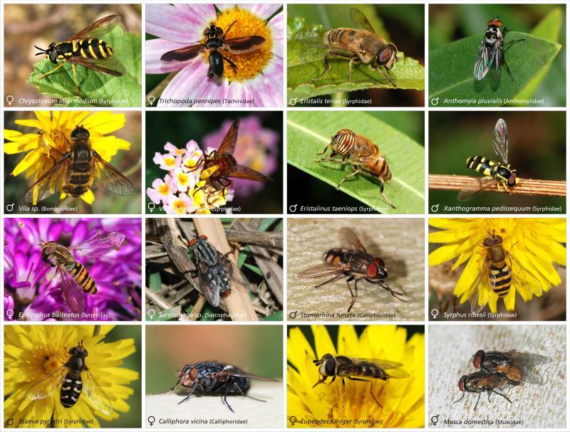 Fly in het Natuurwoordenboek
