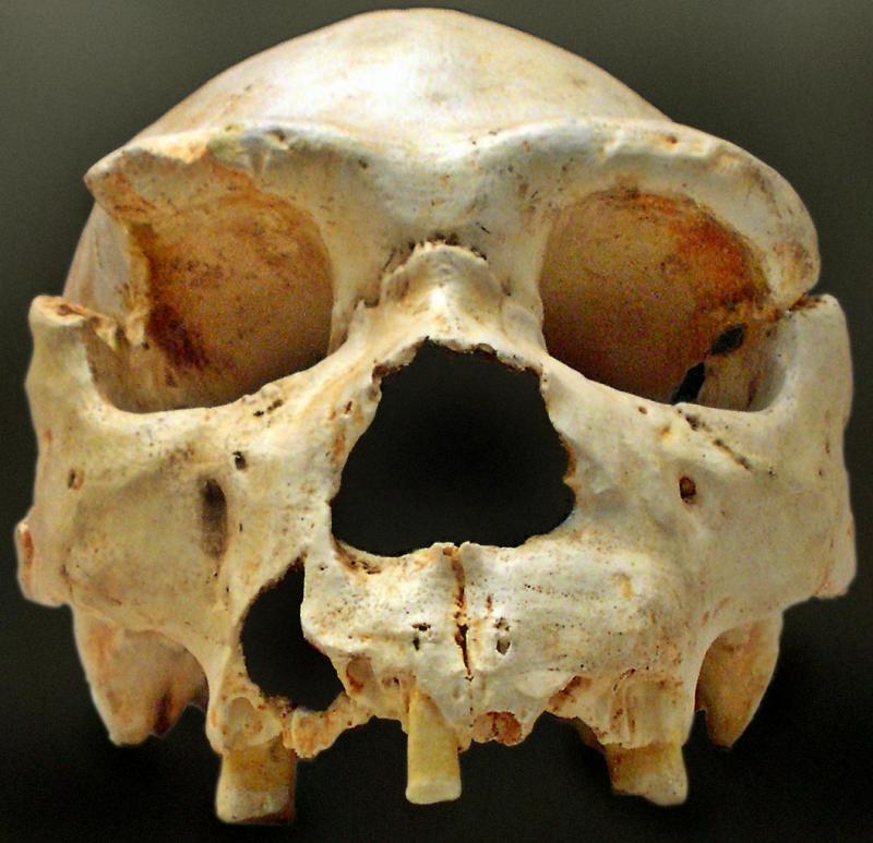 Homo heidelbergensis in het Natuurwoordenboek
